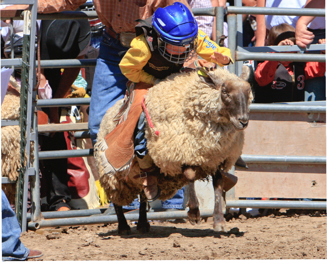 Greeley Stampede Greeley Co June 24 To July 4 2011