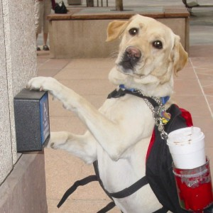 Freedom Service Dogs lab photo