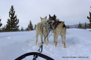 WP dog sledding HeidiTown