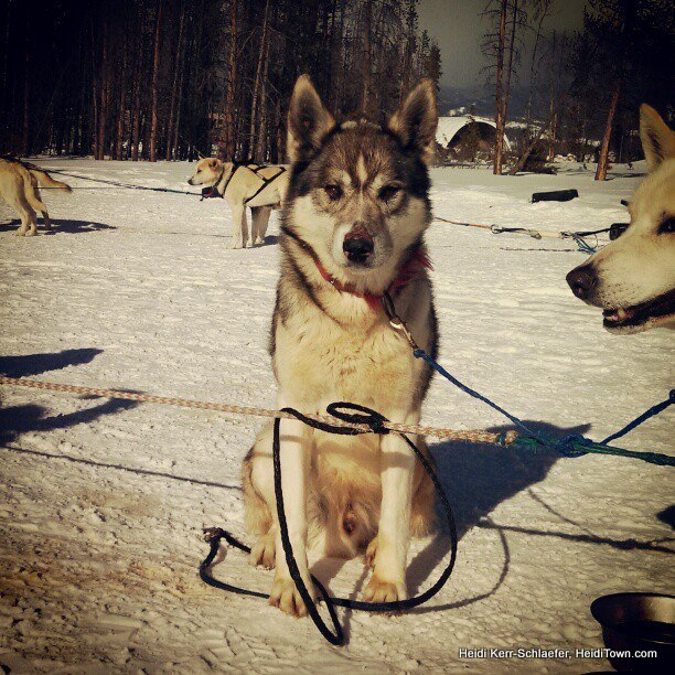 dog sled rides of winter park - 612×612