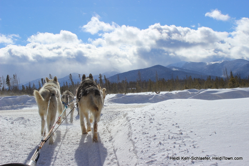 Dog Sledding Winter Park favorite shot HeidiTown