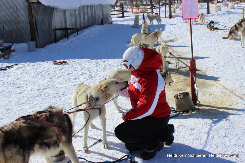 WP dog sledding HeidiTown kisses