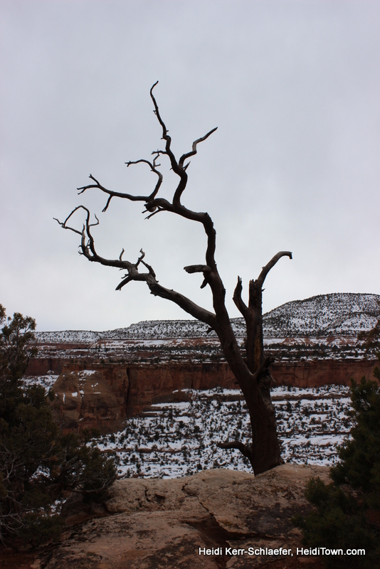 Dead tree CO National Monument March 2013 HeidiTown