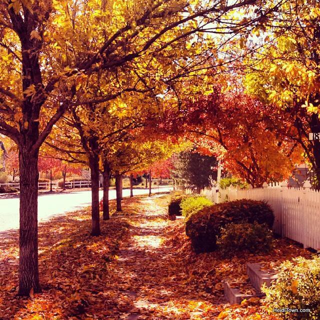Fall in a Colorado neighborhood. HeidiTown.com