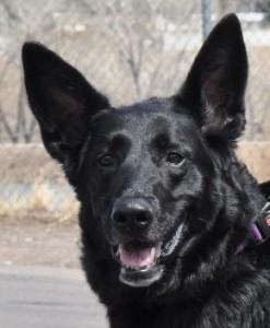 Keeba's Info Lucky Dog Rescue