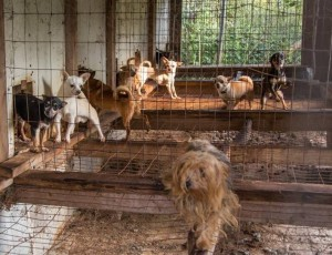National Mill Dog Rescue - puppy mill