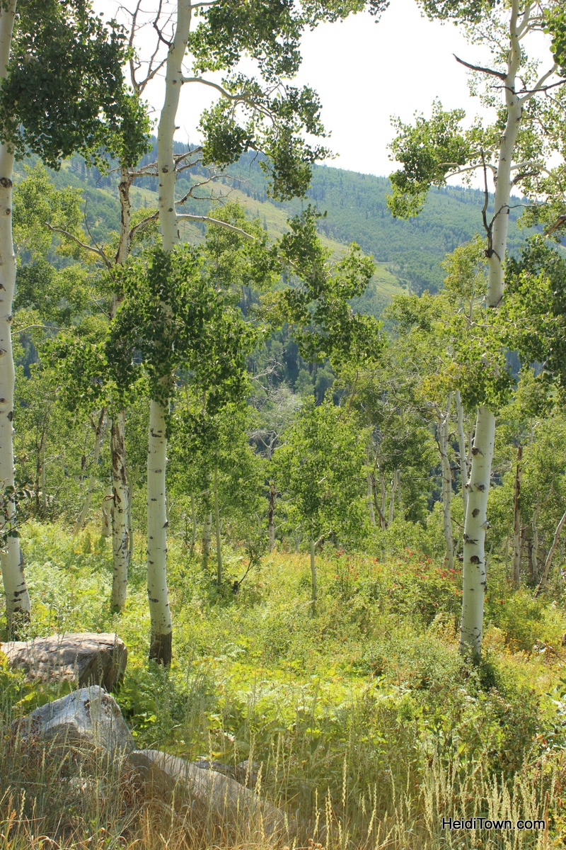 summer hiking at Steamboat Resort. HeidiTown.com