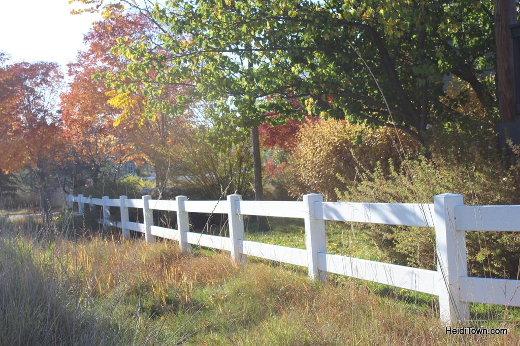 Colorado leaf walk October 19, 2014. HeidiTown (20)