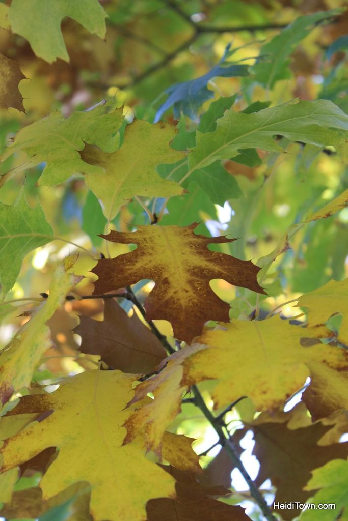 Colorado leaf walk October 19, 2014. HeidiTown (3)