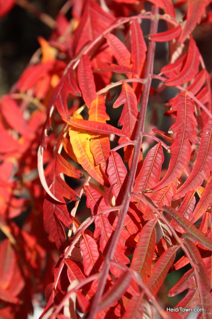 Colorado leaf walk October 19, 2014. HeidiTown (8)
