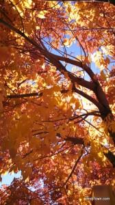 fall  2014 in Colorado. HeidiTown.com