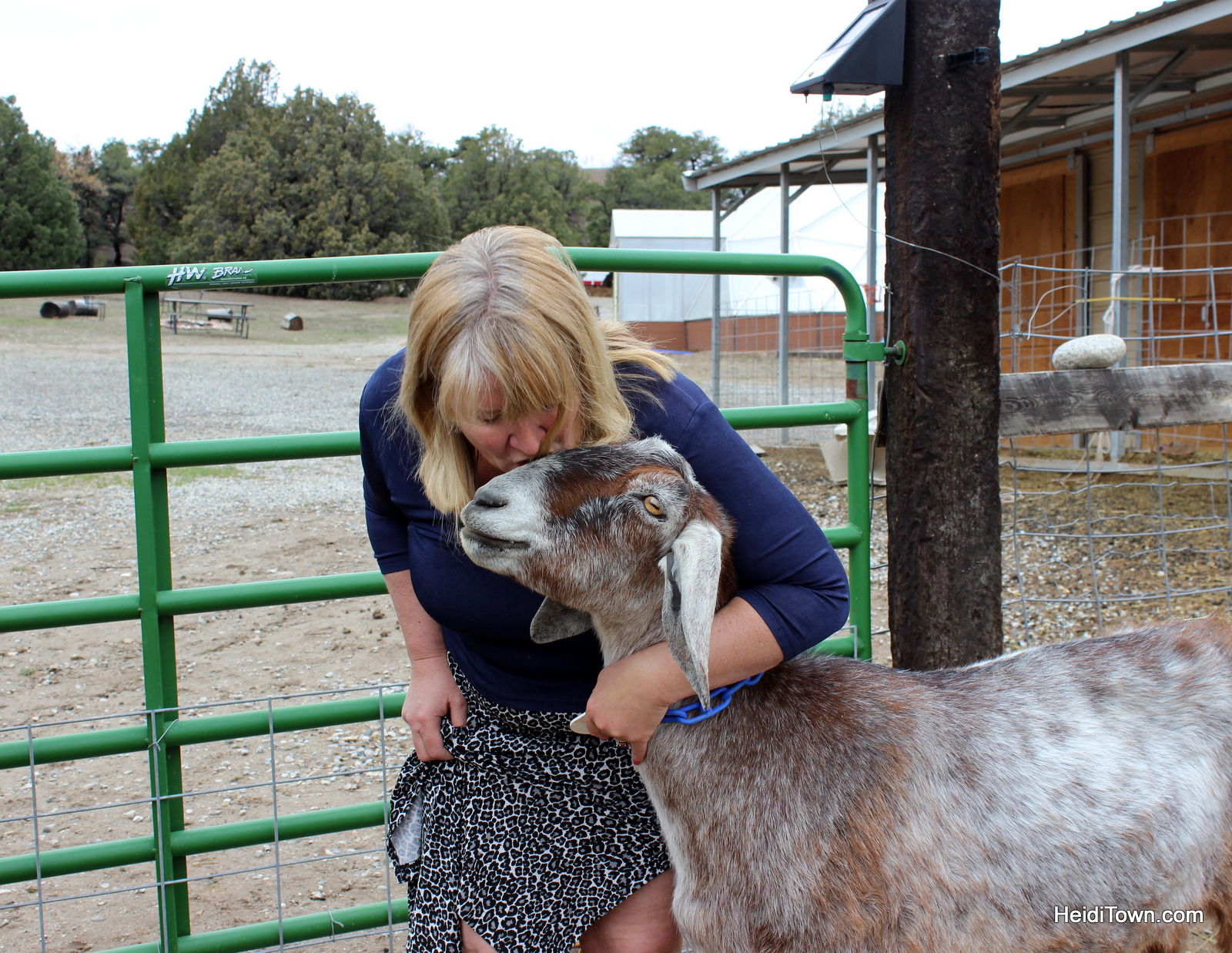 Gina and her goat Squirt at the Mountain Goat Lodge. He may be her favorite. HeidiTown.com
