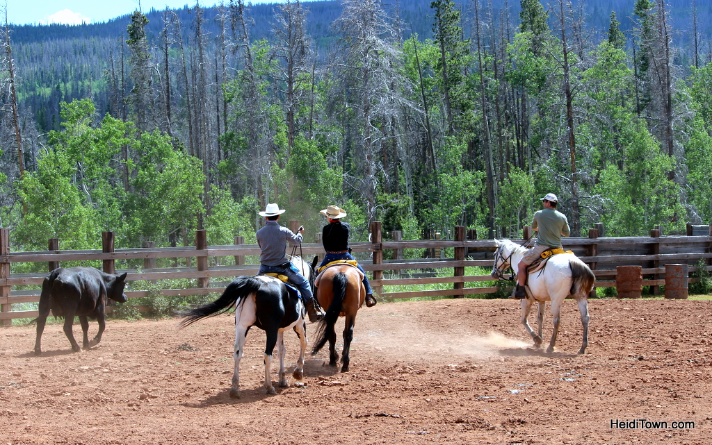 Cattle penning at Latigo Ranch. HeidiTown.com