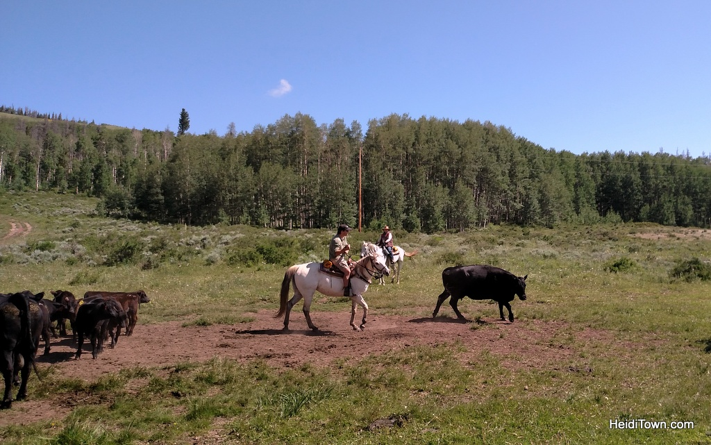 Latigo Ranch. Cow cutting and cattle drive. HeidiTown.com