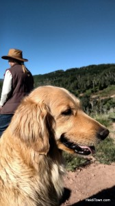 Nora the golden at Latigo Ranch. HeidiTown (1)