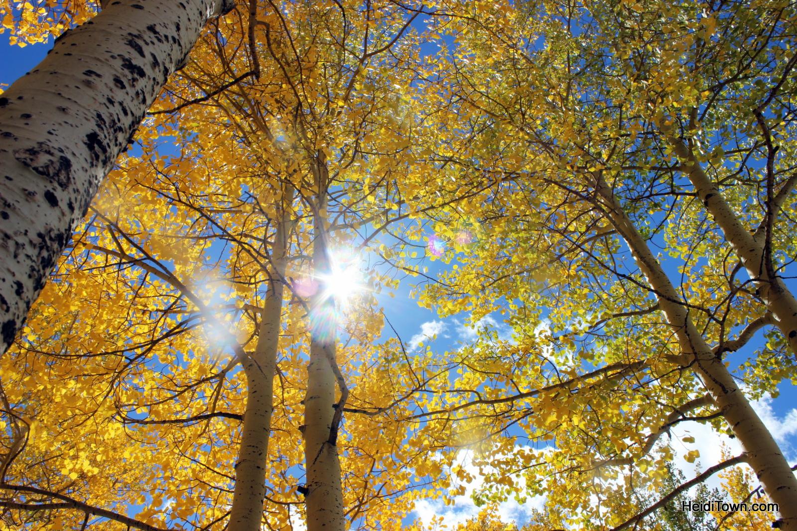 Colorado sunshine on my shoulders make me happy. HeidiTown.com