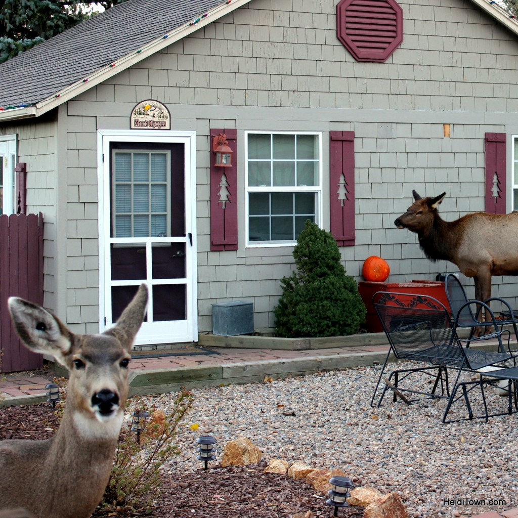 The Rustic Acre. Deer & elk in Estes Park, Colorado, for adult getaways too. HeidiTown