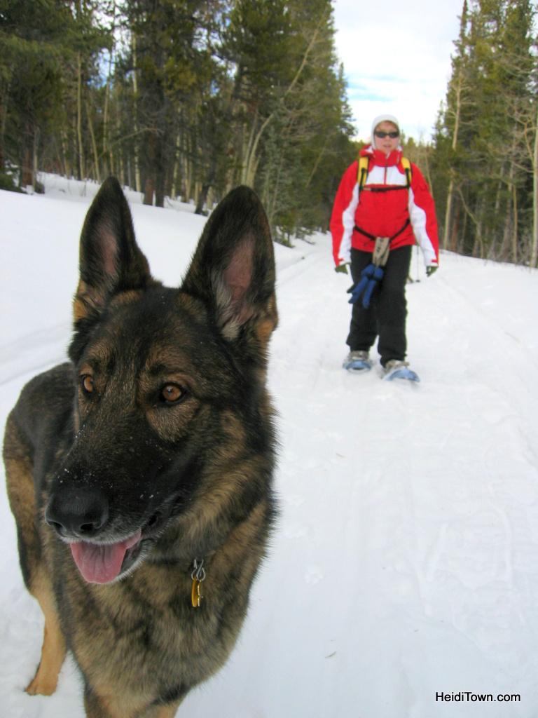 Why it's easy to #OptOutside in Colorado. Snowshoeing with the dog near Boulder, Colorado.