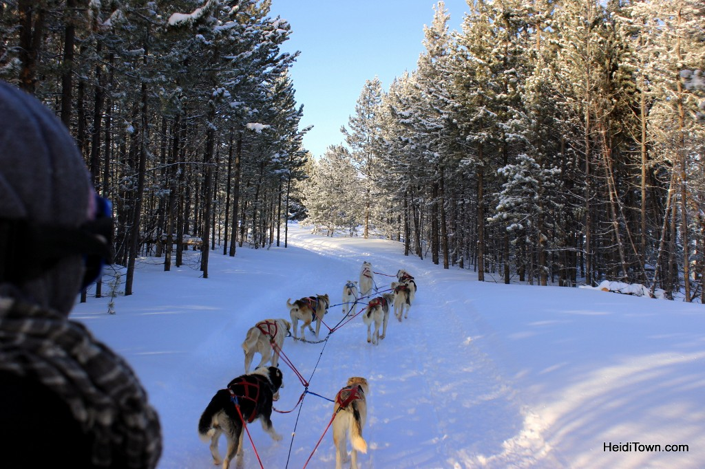 Dog sledding at Snow Mountain Ranch through the trees. HeidiTown.com