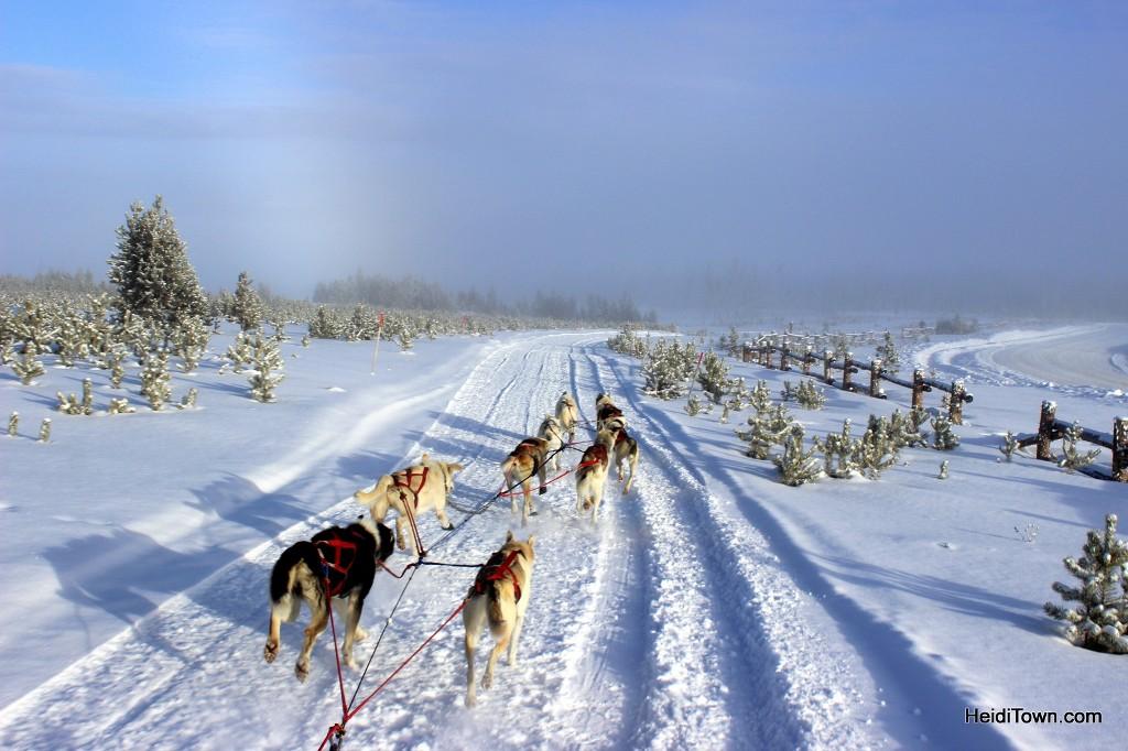 dog sledding at snow mountain ranch heiditown