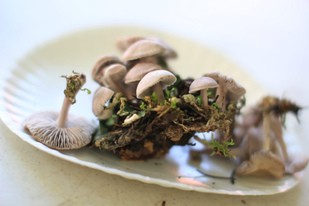 Telluride Mushroom Festival, Michelle Ellis Photography