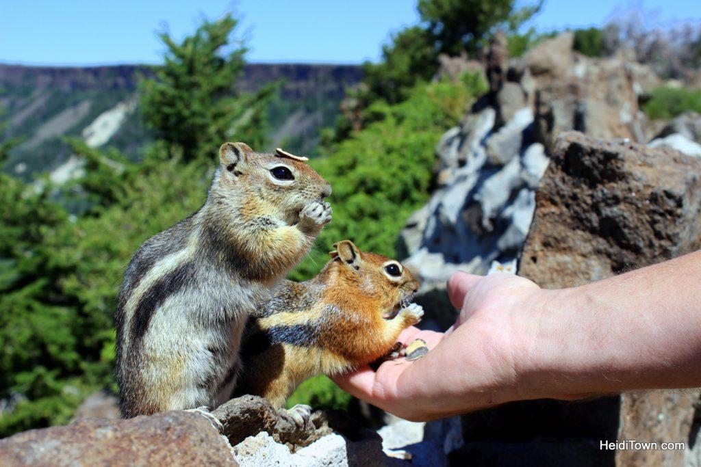 Wildflowers & wild chipmunks on Grand Mesa. HeidiTown.com (2)