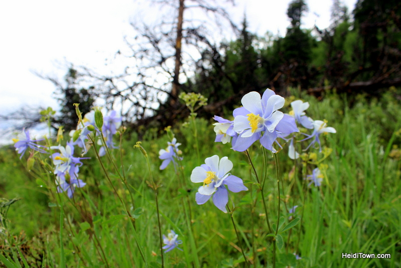 A Snow Mountain Ranch Summer to-do list. Wildflower hunting. HeidiTown.com