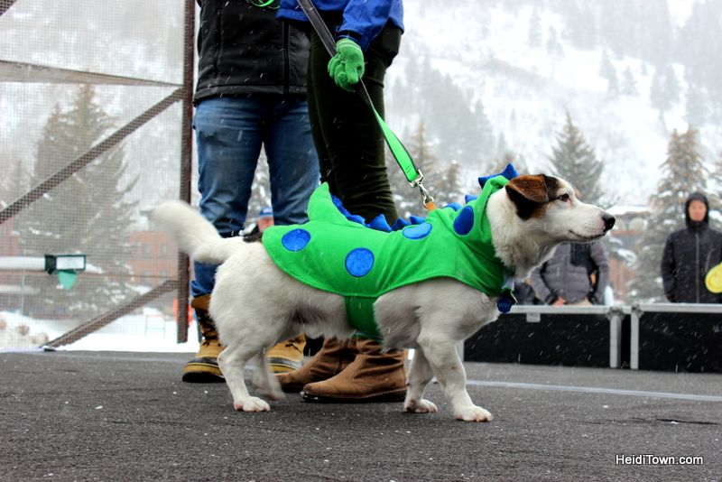 Surprise! You Can Afford to Shop in Aspen, Colorado. Canine Fashion Show at Winterskol. This is Petey. HeidiTown.com