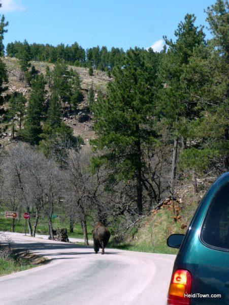 14 Anniversary Trip. Custer State Park in South Dakota. HeidiTown.com
