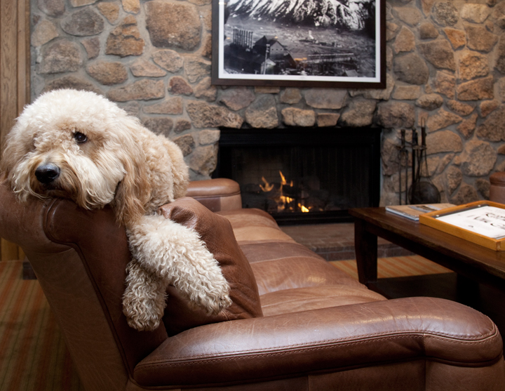 Dog Friendly Hotels In Your Favorite Colorado Destinations Molly Gibson Barclay