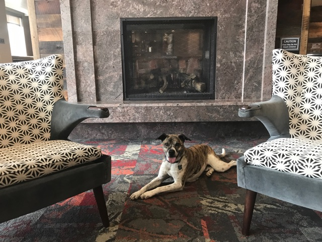 Dog-Friendly Hotels in Your Favorite Colorado Destinations Residence Inn Breckenridge