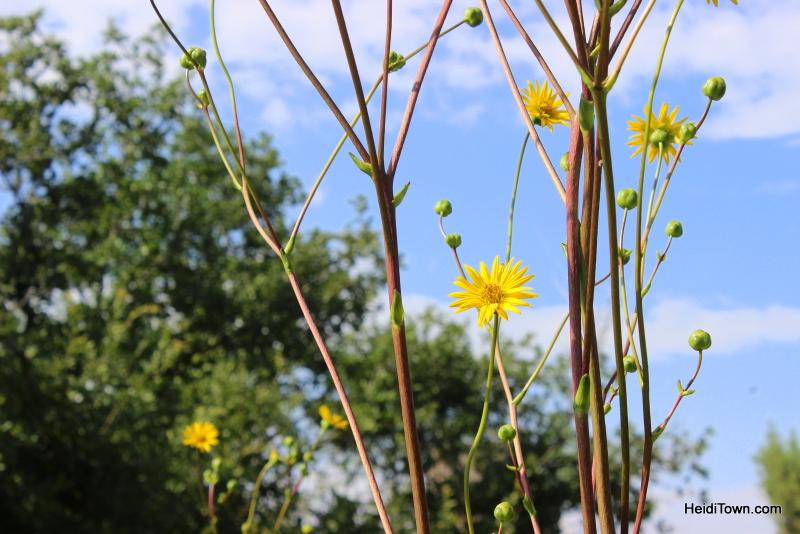 Shooting All the Flowers at Denver Botanic Gardens (11)