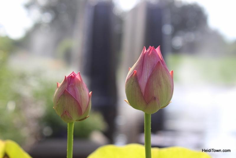 Shooting All the Flowers at Denver Botanic Gardens (14)