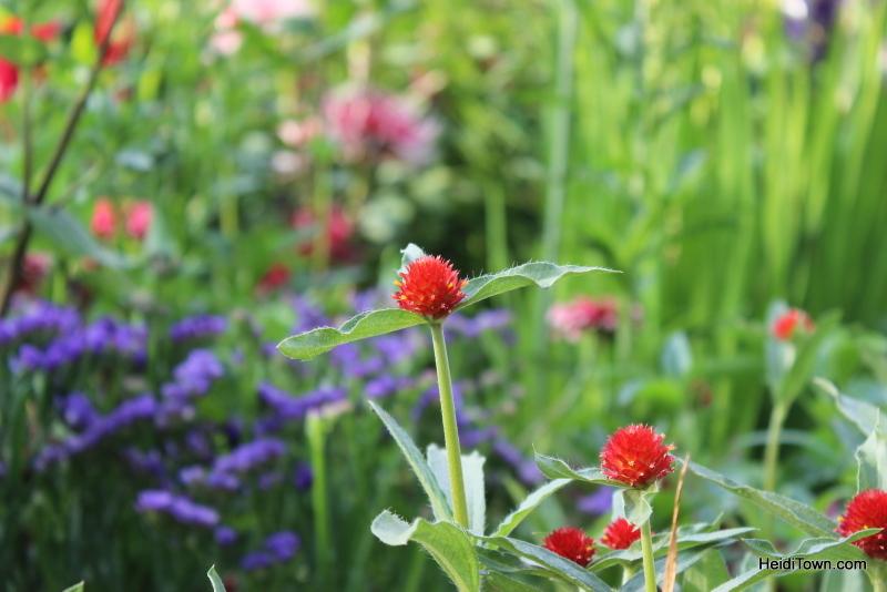 Shooting All the Flowers at Denver Botanic Gardens (15)
