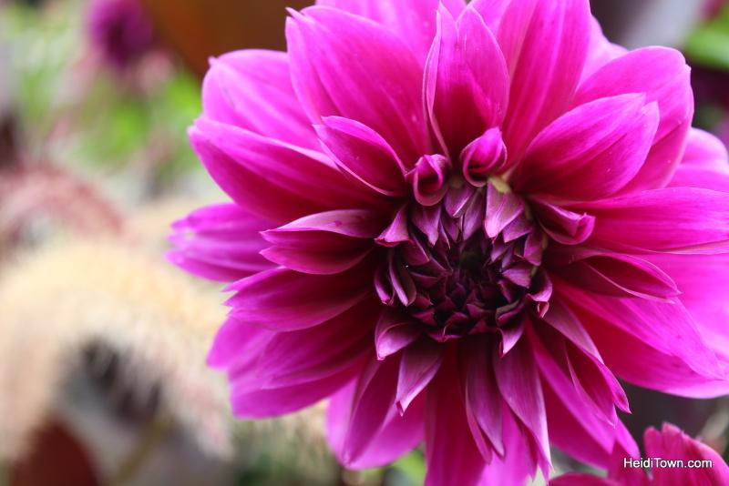 Shooting All the Flowers at Denver Botanic Gardens (6)