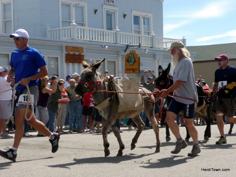 Covering Burro Days in Fairplay, CO in 2010. HeidiTown.com