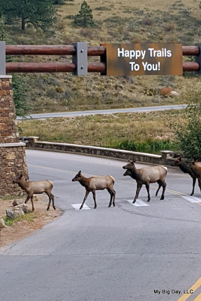 Featured Festival Fall Back Beer Fest 2017, elk crossing the road in Estes Park, photo by My Big Day, LLC