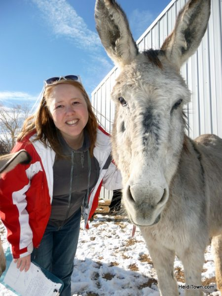 The Best Last Minutes Holiday Gifts in Colorado & Beyond, Longhopes Donkey Rescue