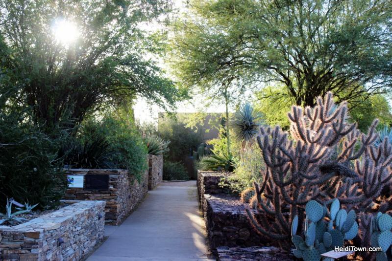 visit another planet arizonas desert botanical garden - Desert Botanical Garden