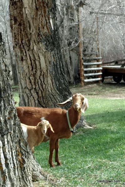 Visit 350 Wild Horses at Deerwood Ranch in Wyoming. HeidiTown 12