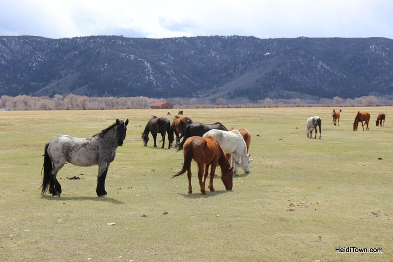 Visit 350 Wild Horses at Deerwood Ranch in Wyoming. HeidiTown 5