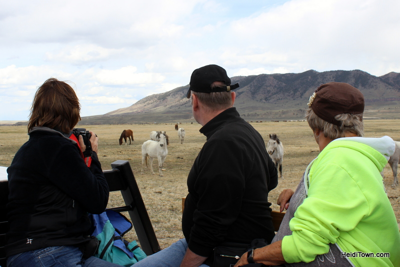 Visit 350 Wild Horses at Deerwood Ranch in Wyoming. HeidiTown 6