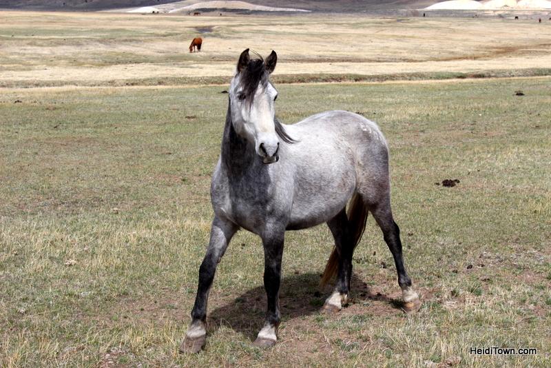 Visit 350 Wild Horses at Deerwood Ranch in Wyoming. HeidiTown 9
