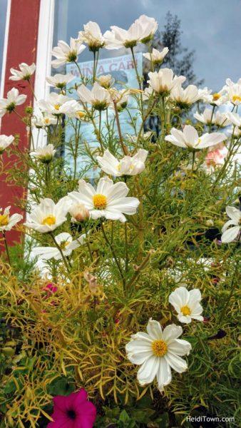 Stay in Keystone, Colorado. Flowers outside Luigi's Pasta House. HeidiTown.com