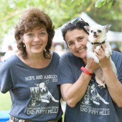Dogs & Beer in Berthoud, Colorado: 7th Annual Hops & Harley