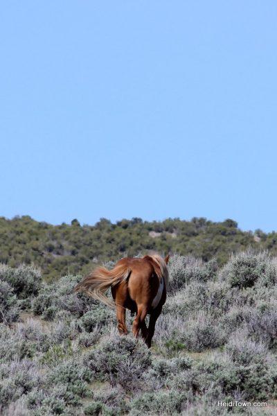 The Wild Horses of Northwest Colorado Sand Wash Basin HeidiTown (2)