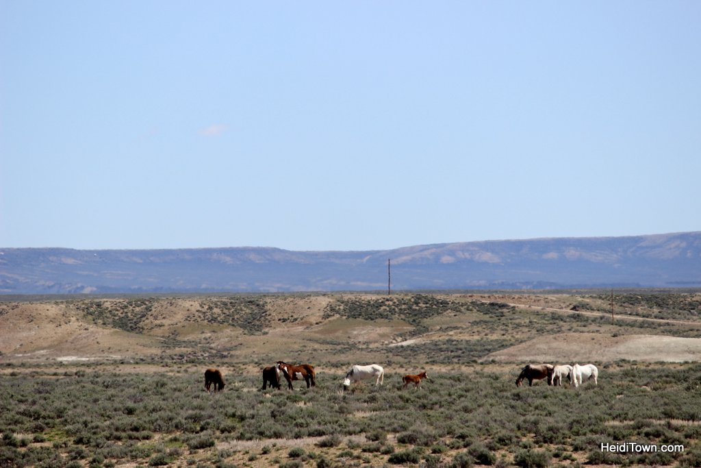 The Wild Horses of Northwest Colorado Sand Wash Basin HeidiTown (4)