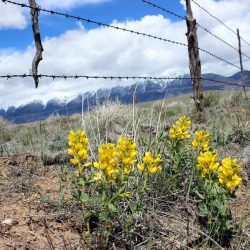 Living History in the San Luis Valley of Colorado. HeidiTown.com (9)