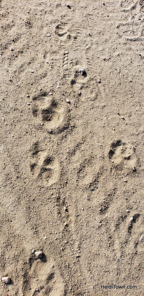 Meet Fritzi, the German Shepherd Colorado Dog & Head of Security. HeidiTown (4)