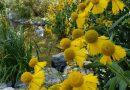 The FREE Cheyenne Botanic Gardens in Cheyenne, Wyoming. HeidiTown (13)